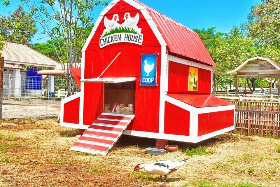 บ้านพี่ไก่จ๋า ที่ ฟาร์มแกะพัทยา