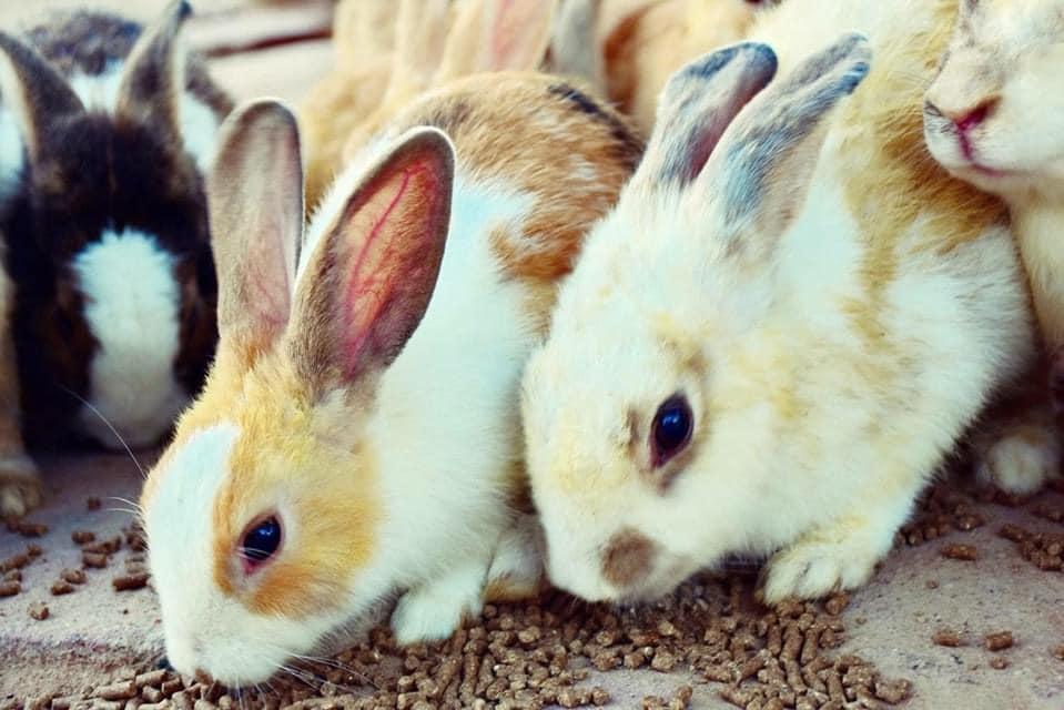 กระต่ายน้อยน่ารัก ฟาร์มแกะพัทยา