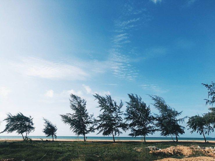 ต้นสนปลิ้วตามลม ที่ หาด EOD นภาธาราภิรมย์