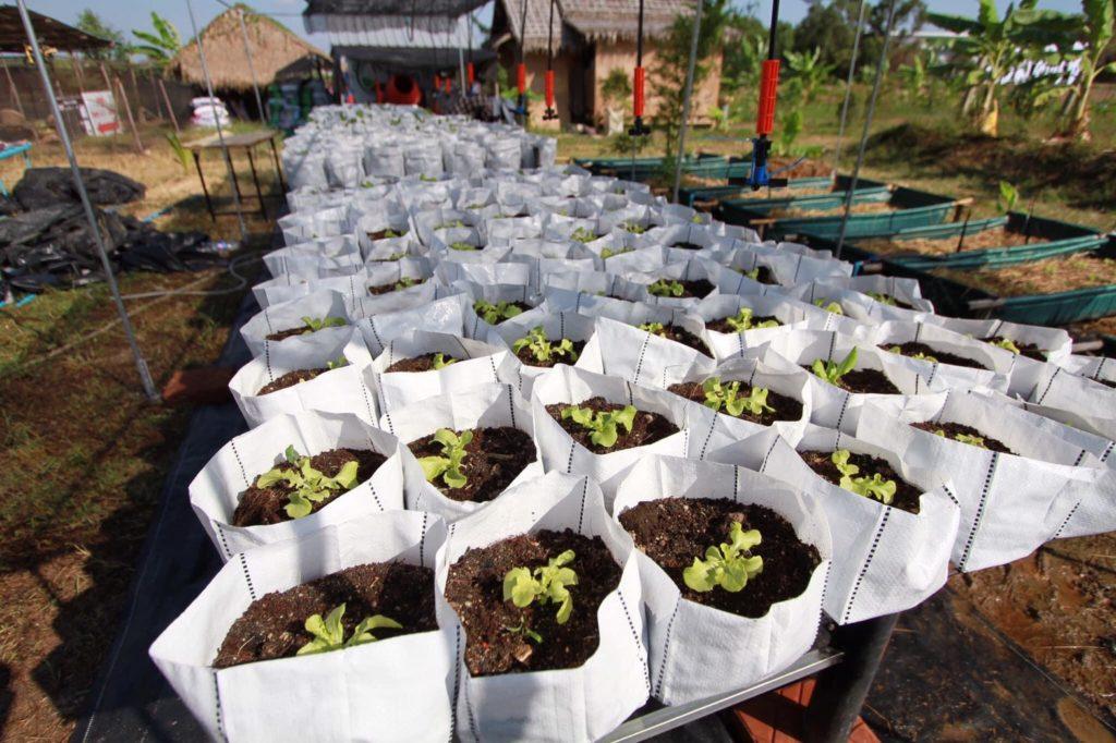 Farm in C-Coffee  แนวเกษตรอินทรีย์   ปลูกผักปลอยดสารพิษ
