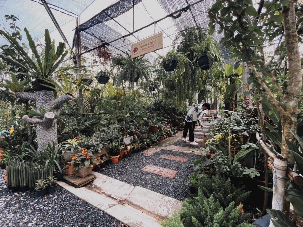 กระท่อมเวตาล คาเฟ่กลางตลาดต้นไม้