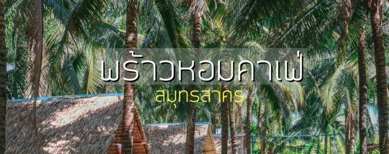 พร้าวหอม คาเฟ่ (PhraoHom cafe) นั่งชิลกลางสวนมะพร้าว ที่บ้านแพ้ว สมุทรสาคร