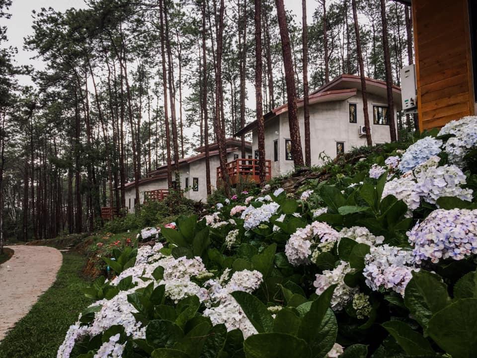 สวนป่าดอยบ่อหลวง บ้านหลังน้อยในสวนสน ดอกไม้สวยงาม