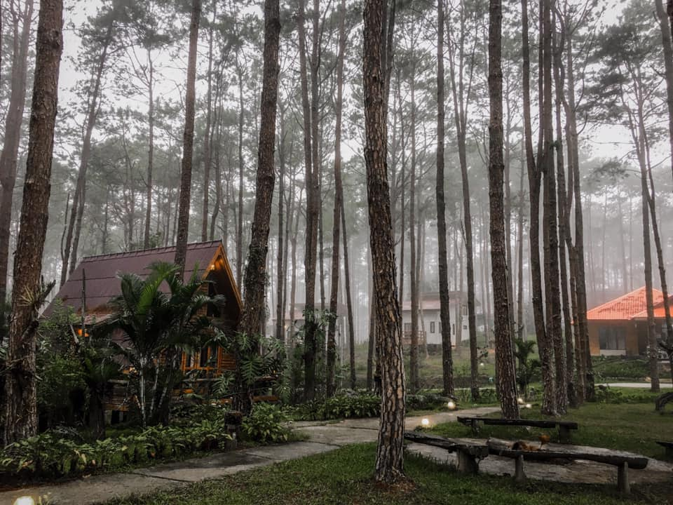 สวนป่าดอยบ่อหลวง กลางป่า