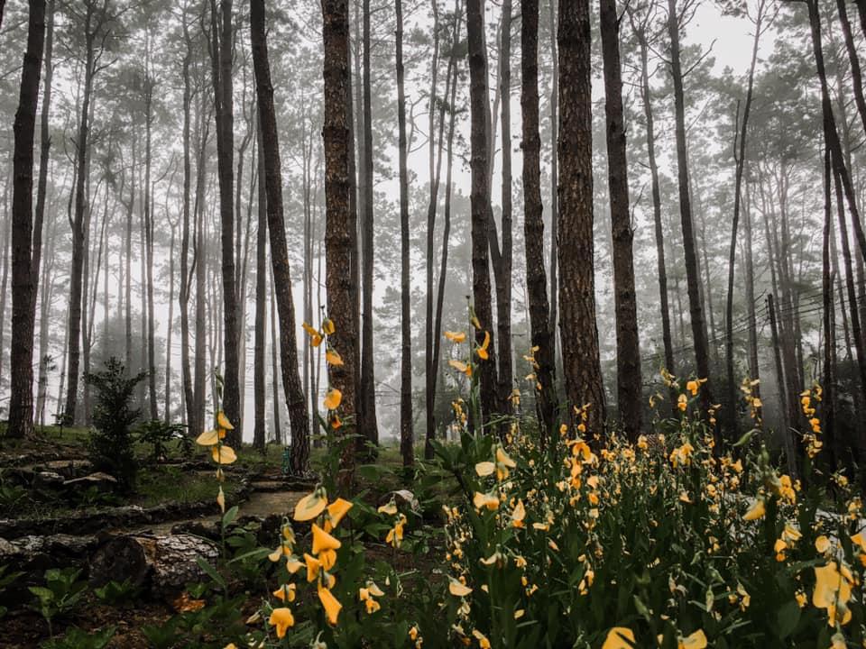 สวนป่าดอยบ่อหลวง สวนสน โอบกอดด้วยธรรมชาติ @เชียงใหม่