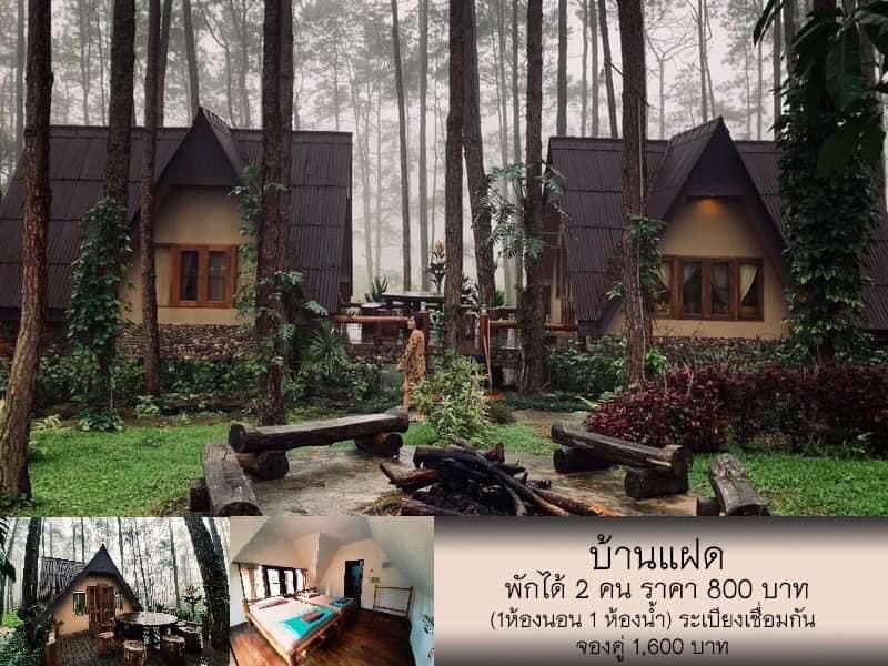 สวนป่าดอยบ่อหลวง บ้านหลังน้อยในสวนสน โอบกอดด้วยธรรมชาติ