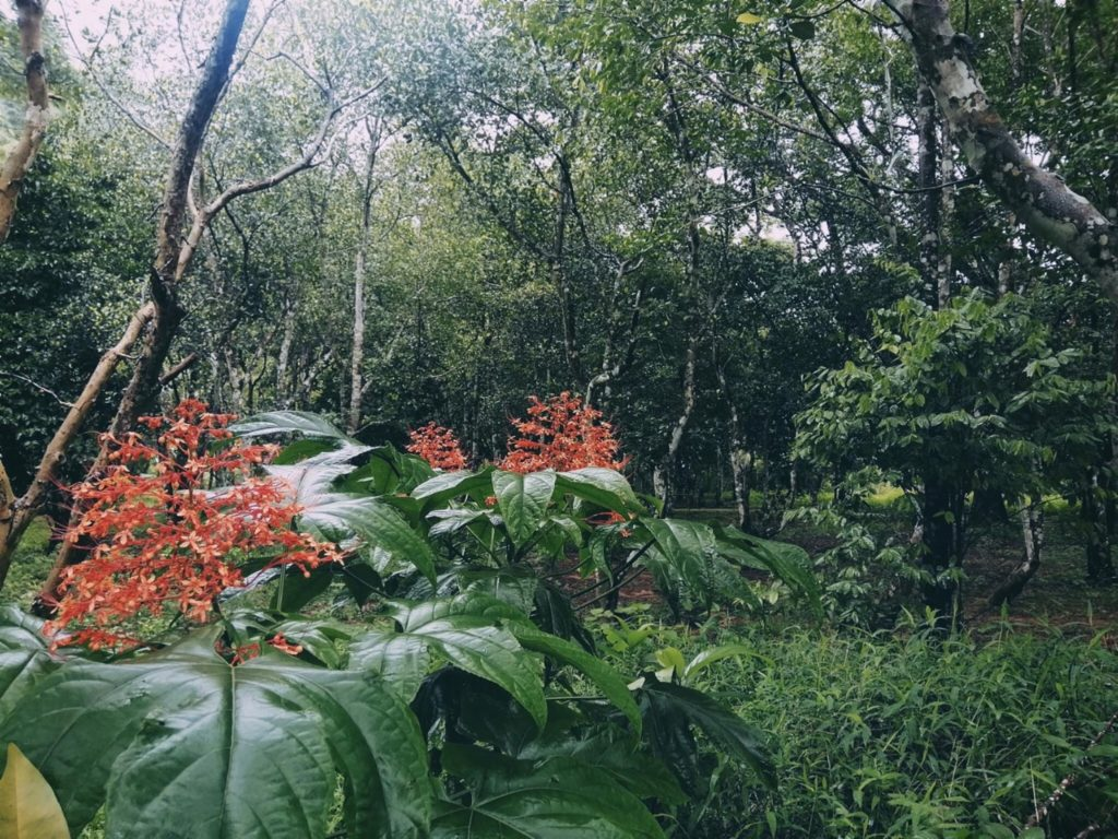 สวนลุงโชย นครนายก กางเต็นท์เล่นน้ำ ท่ามกลางธรรมชาติ