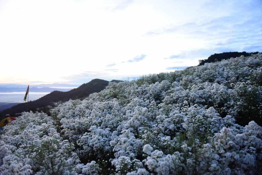 ยิ่งยงสวนดอกไม้ ดอกไม้กลางเขาที่สวยงาม