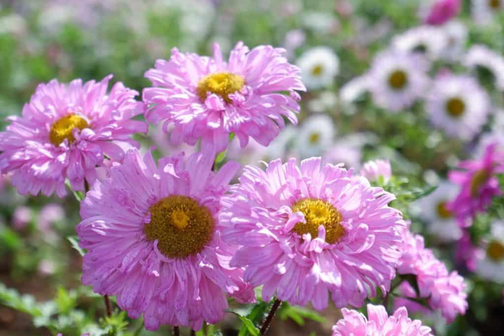 ต้องไปชมดอกไม้สวยๆที่ ยิ่งยงสวนดอกไม้ สักครั้ง