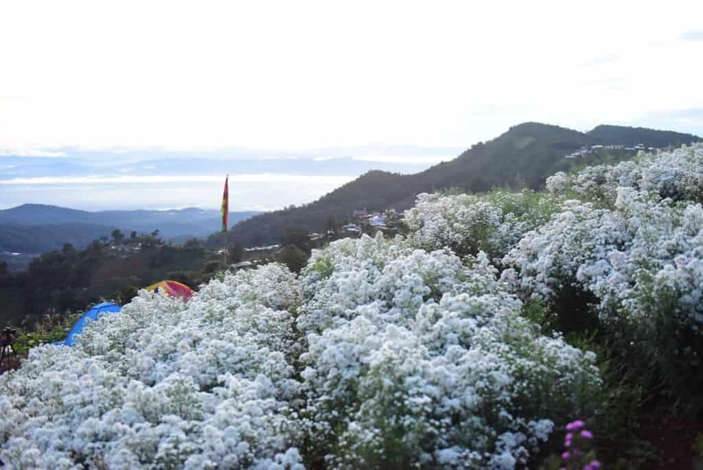 ยิ่งยงสวนดอกไม้ มีสถานที่ให้กางเต็นท์ได้ด้วย