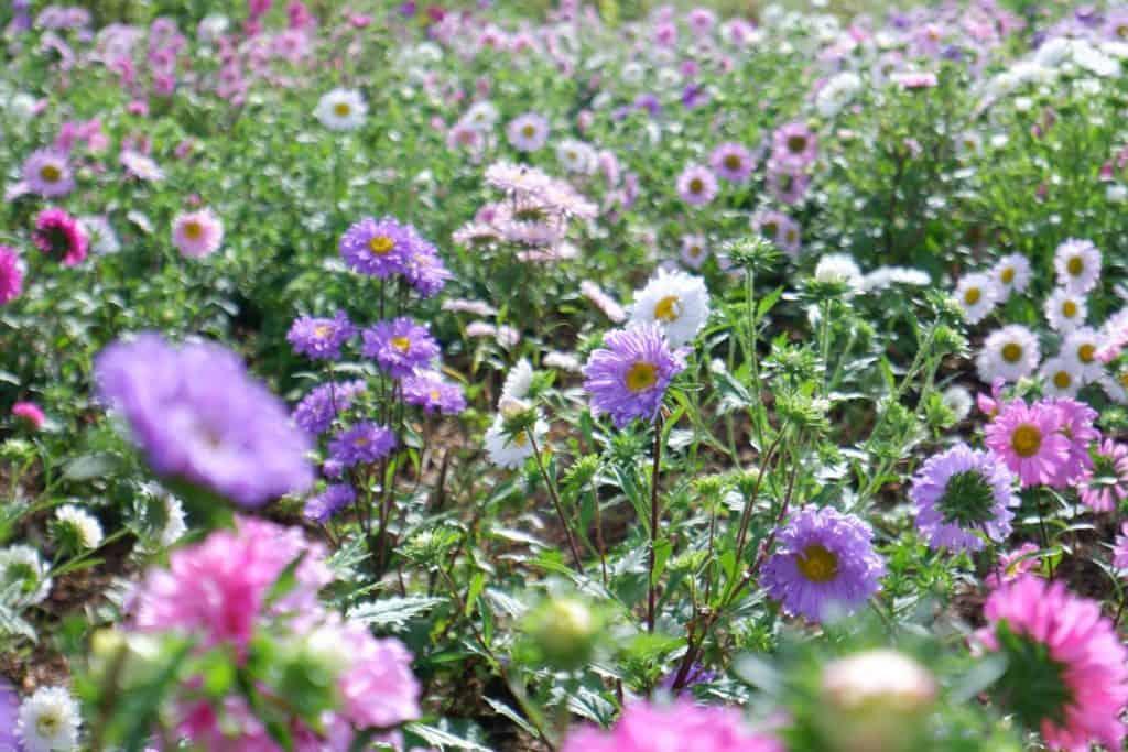 ยิ่งยงสวนดอกไม้ มีดอกไม้สวยๆรอนักท่องเที่ยวทุกท่านอยู่