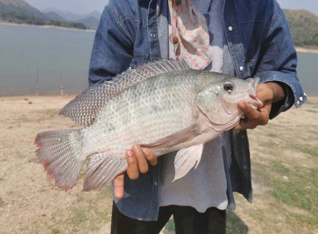 ไร่อิงแก่ง แก่งกระจาน @เพชรบุรี ปลาสดๆจากธรรมชาติ