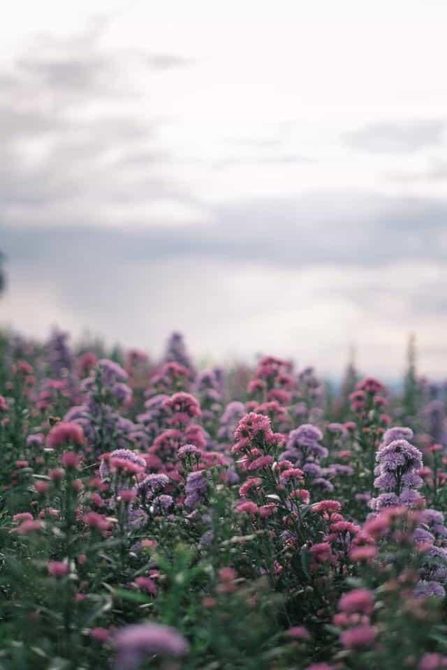 เที่ยวเชียงใหม่ ที่ ยิ่งยงสวนดอกไม้