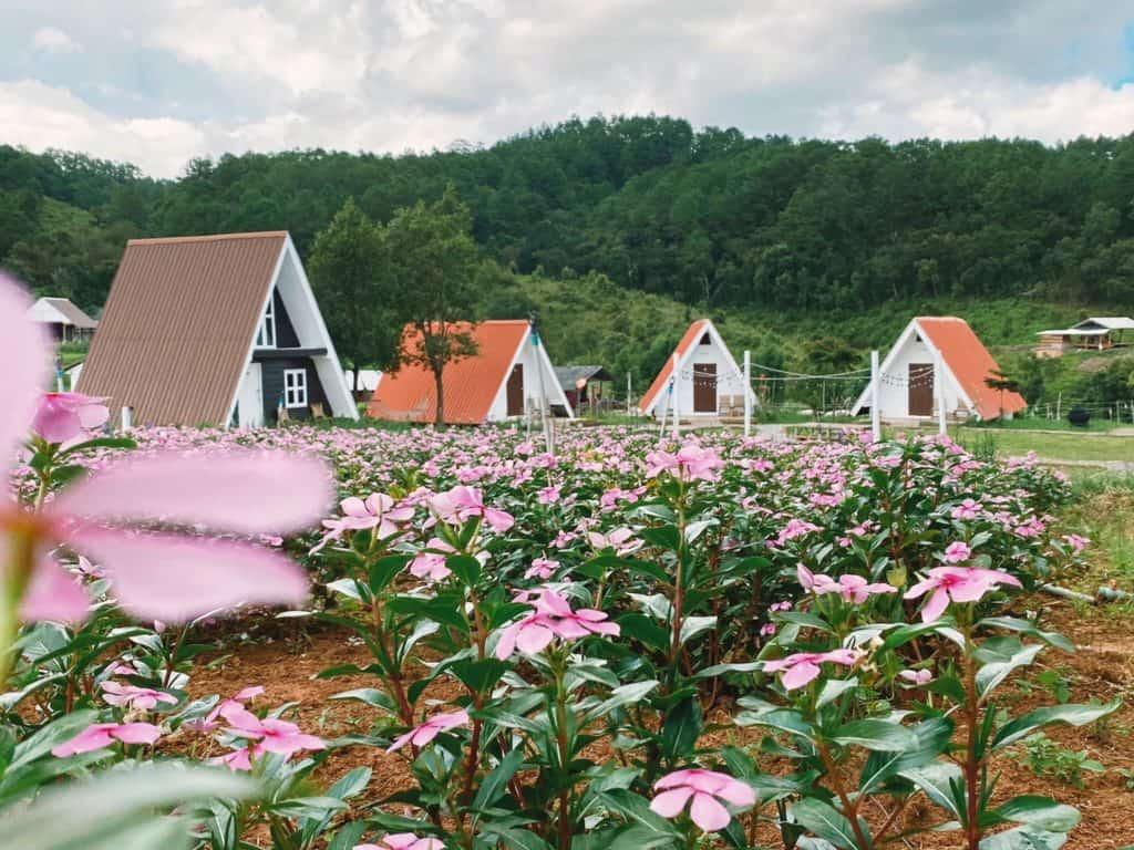 ทุ่งดอกไม้สวยๆ บ้านปลายดอย (Baan Plai Doi)