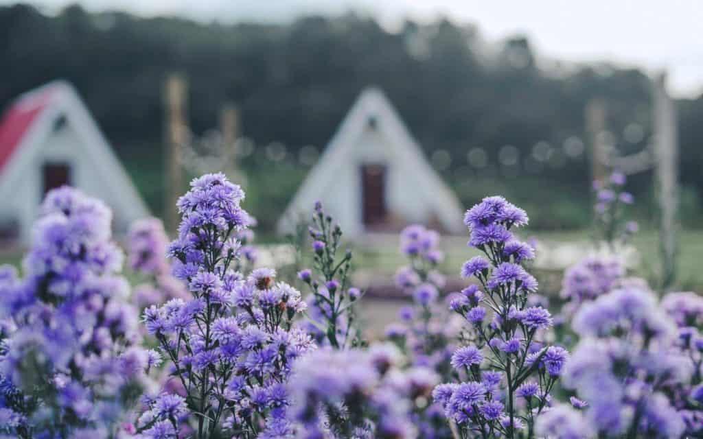 บ้านปลายดอย (Baan Plai Doi)  มีดอกไม้สวยๆให้นักท่องเที่ยวได้ชม