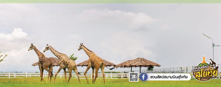 เที่ยววันหยุด สวนสัตว์สนามบินสุโขทัย ที่นี้มีสัตว์เล็กใหญ่ มากมายให้ได้ชม