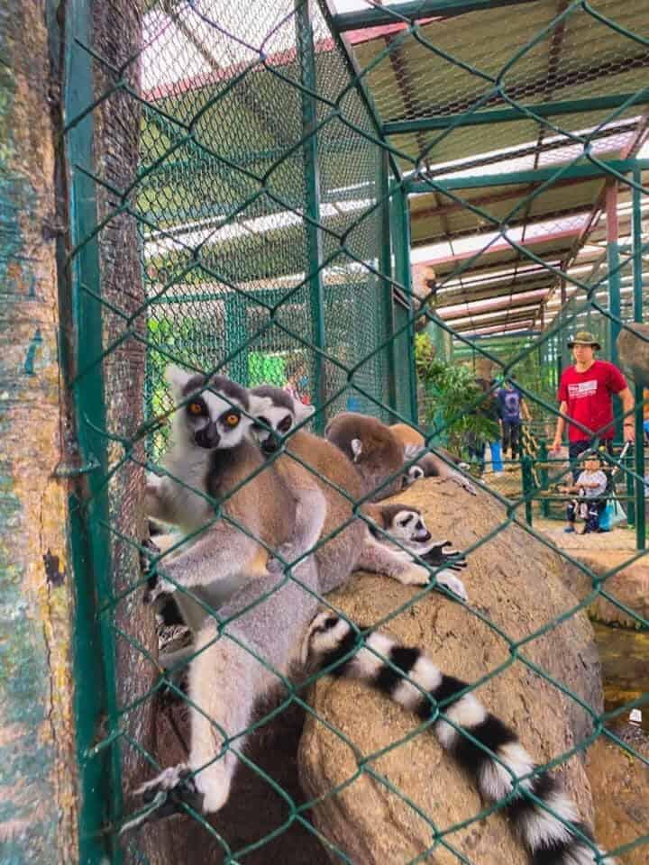สวนสัตว์สนามบินสุโขทัย สัตว์เล็ก ที่หาดูยาก