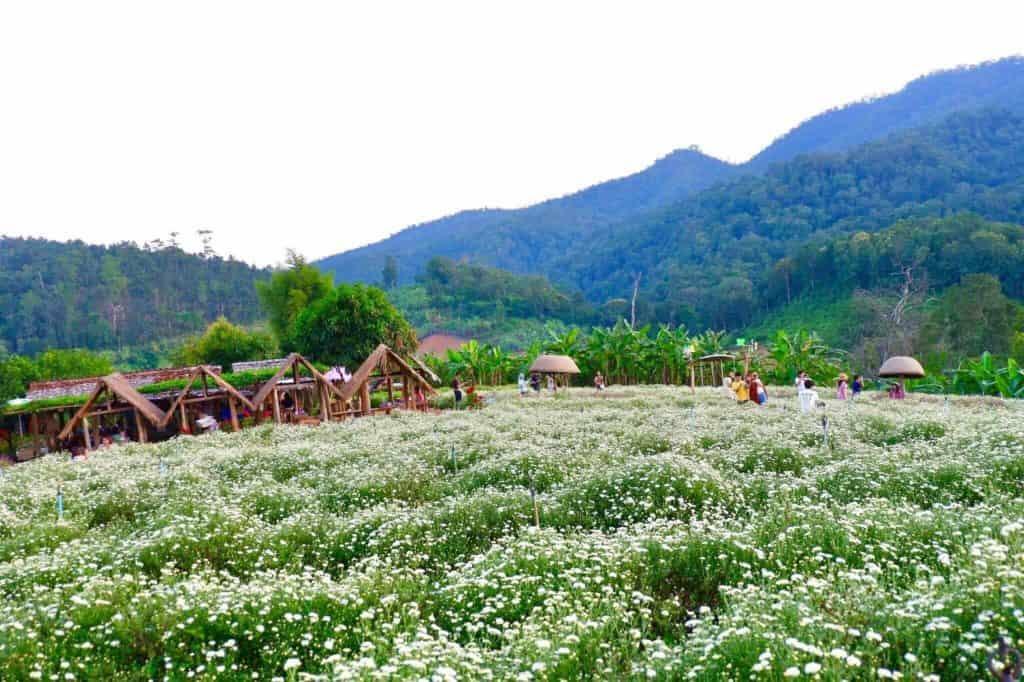 ทุ่งดอกเก็กฮวย สะเมิง วิวสวยมาก