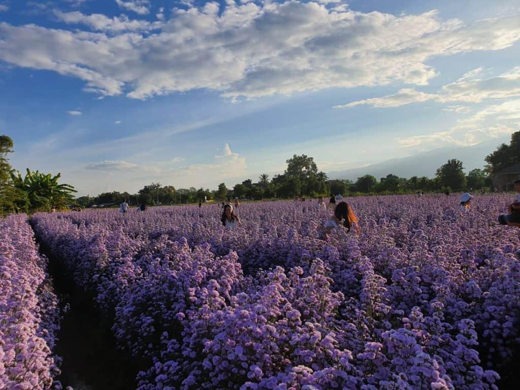 เมื่อเราไปถึง I LOVE FLOWER FARMจังหวัดเชียงใหม่ เราจะเจอกับสิ่งที่สวยงามมากๆ