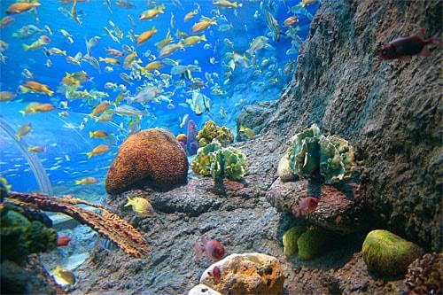 ชวนเที่ยวชมโลกใต้ทะเล อันเดอร์วอเตอร์ เวิลด์ พัทยา
