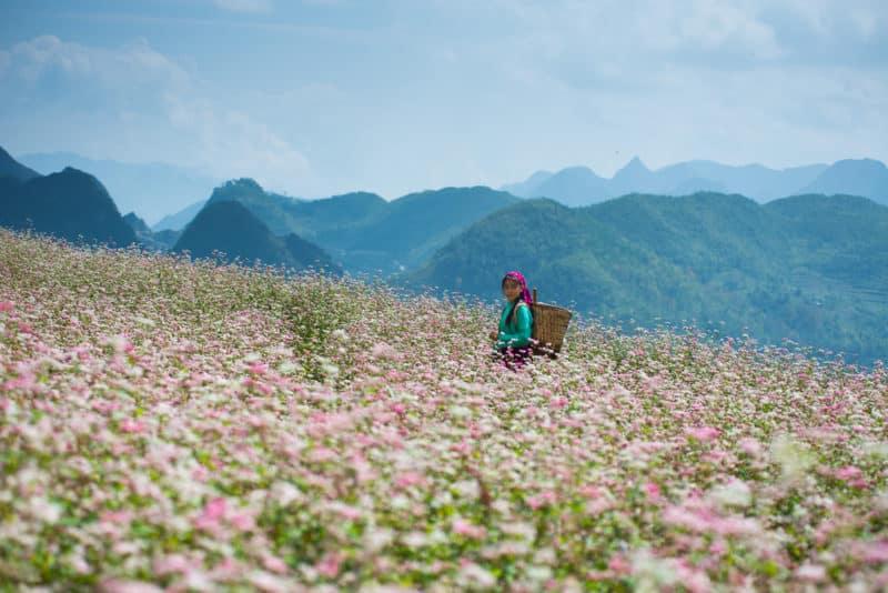 ที่เที่ยวเวียดนามสวยๆ ที่สวนดอกไม้สีชมพู